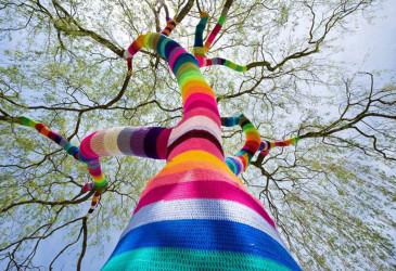 albero lana